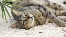 cat-1779781_1920